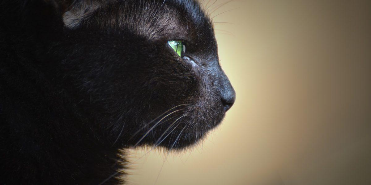 cat-3150515_1920